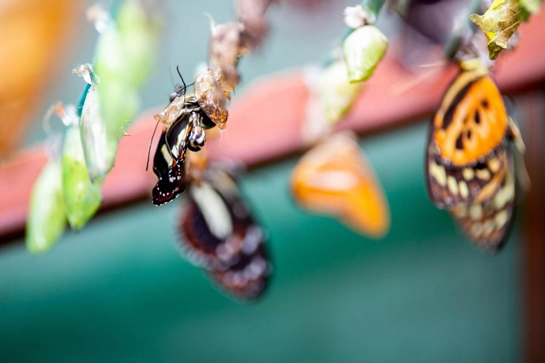 jardin-aux-papillons-morbihan-bretagne-sud-35 © Meero
