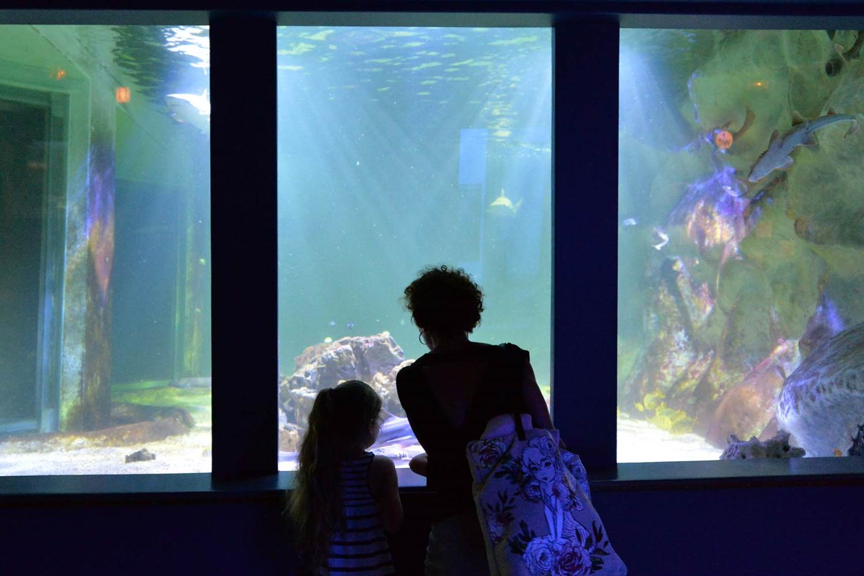 Aquarium-de-Vannes-Morbihan-Bretagne-Sud-10 © Michel RENAC