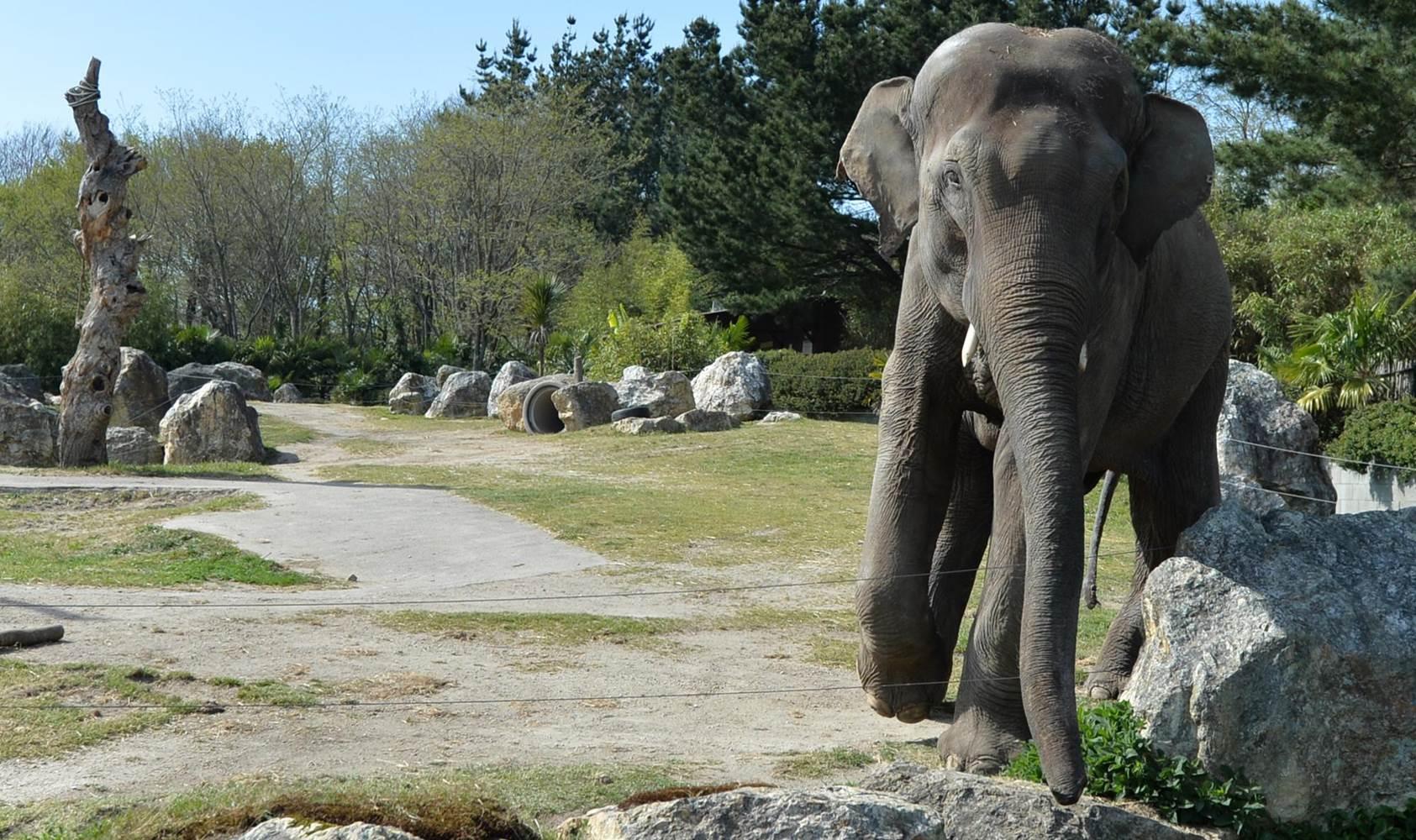 Parc-Zoologique-Pont-Scorff-Morbihan-Bretagne-Sud © Michel RENAC