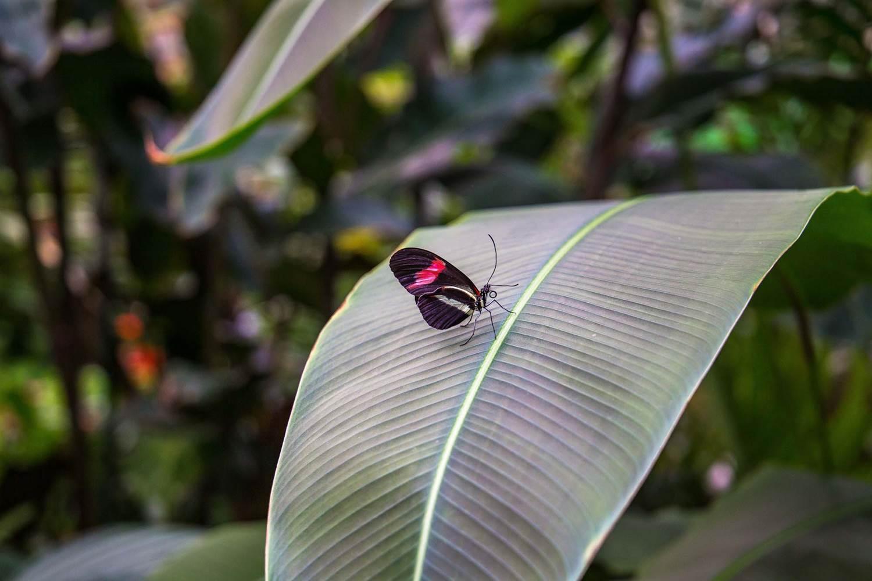 jardin-aux-papillons-morbihan-bretagne-sud-24 © © Magalie BARRE
