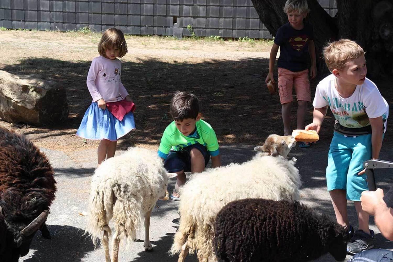 Site Ecolabel entretenu par les moutons ©