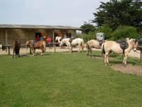 Centre Equestre Les Highlands