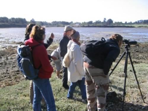 Balade Nature et Ornithologique à Saint-Gildas-de-Rhuys