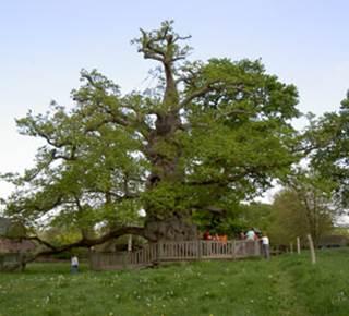 Cpie - Forêt de Brocéliande