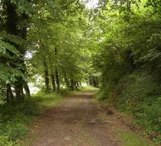 Forêt du Hingair