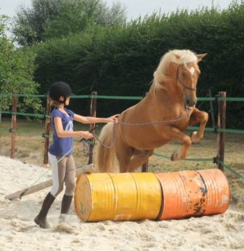 Centre-Equestre-Lanvenegen-Pays-Roi-Morvan-Morbihan-Bretagne-Sud