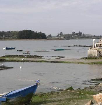 Ostréiculture-Captain-Marée-Séné-Golfe-du-Morbihan-Bretagne sud