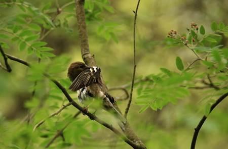 Les oiseaux forestiers